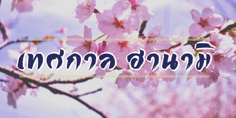 เทศกาล ฮานามิ (Hanami)