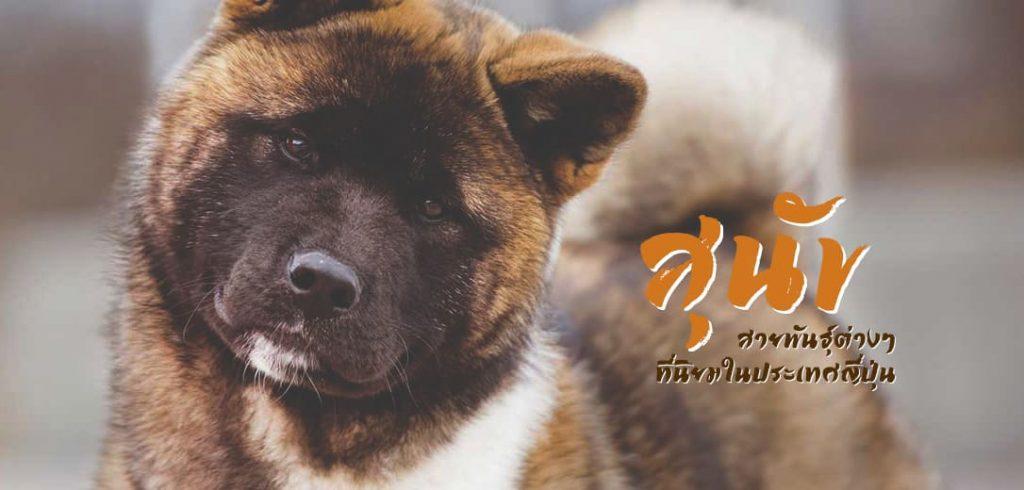 สุนัขสายพันธุ์ต่างๆที่นิยมในประเทศญี่ปุ่นและต่างชาติ