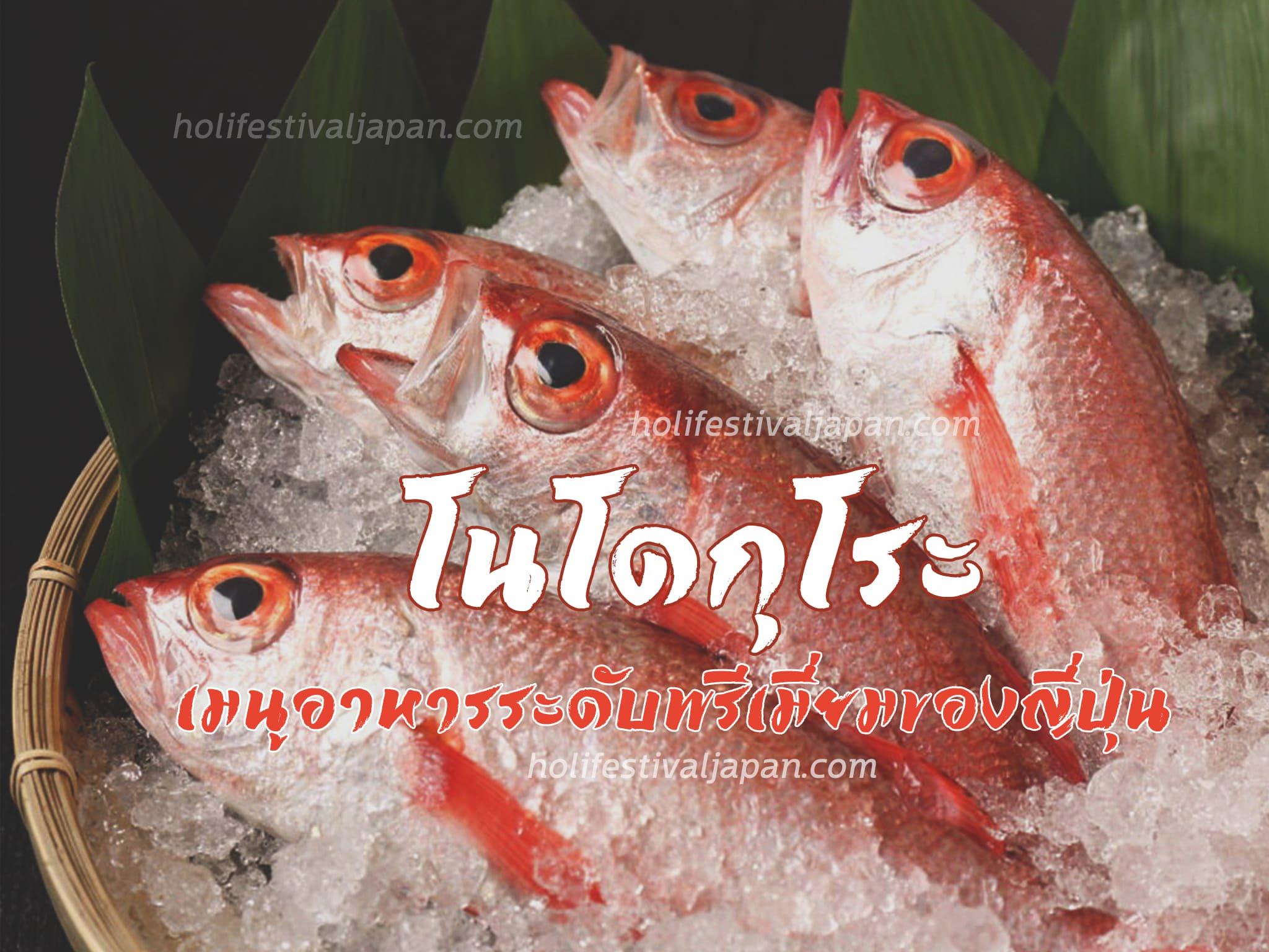 โนโดกุโระ ลิ้มรสชาติความอร่อยของปลาเนื้อขาว เมนูอาหารระดับพรีเมี่ยม