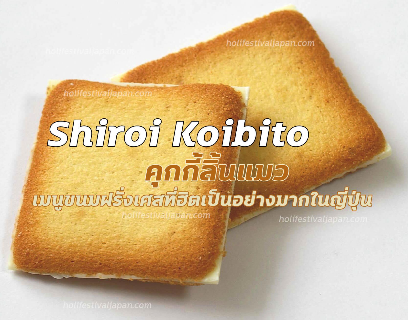 Shiroi Koibito คุกกี้ลิ้นแมว ขนมฝรั่งเศสเป็นที่ยอดฮิตเป็นอย่างมากในญี่ปุ่น